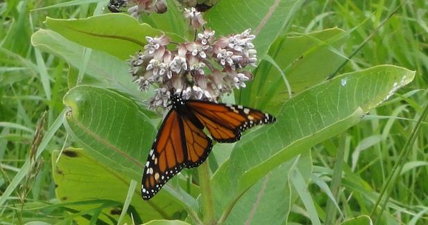 crp pollinator seed