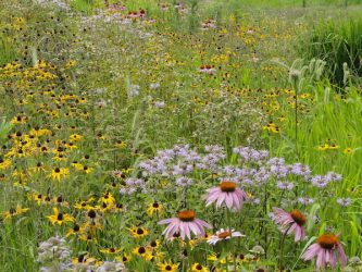 Pre Approved Native Grass Flower Seed Mix