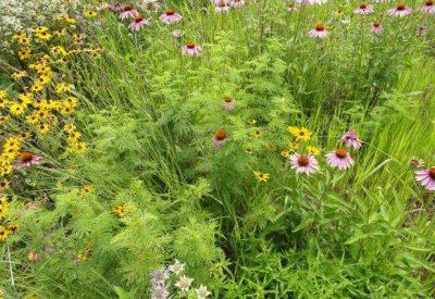 Native Grass Seed Mixes